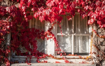 5 Fall Outdoor Electrical Safety Tips